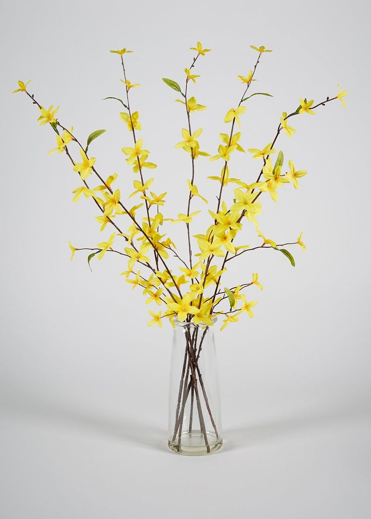 Yellow forsythia flowers & clear vase. Dimensions: 65cm x 60cm.