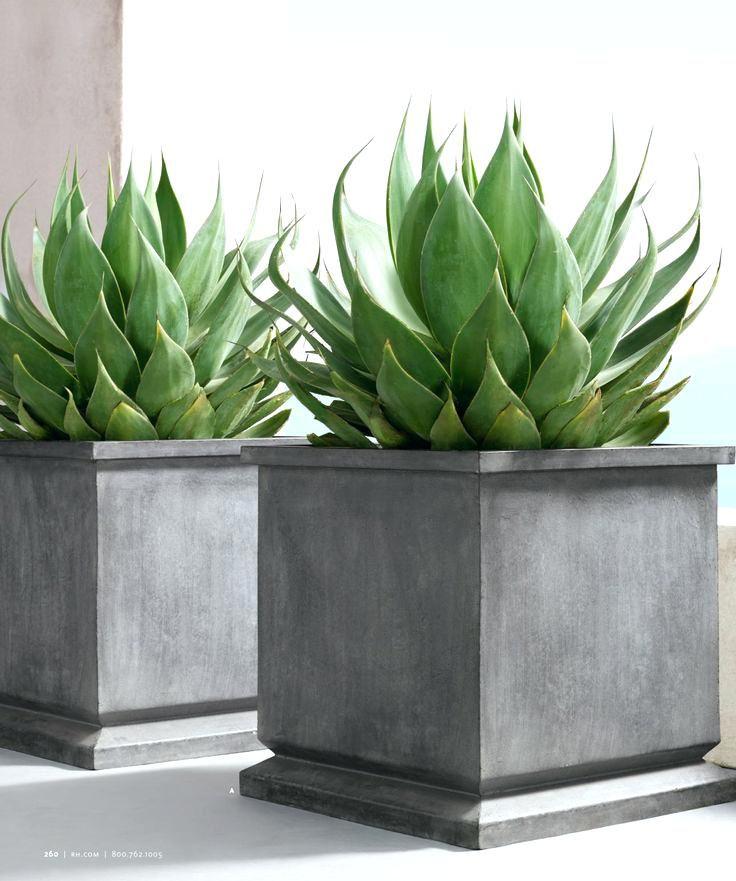 contemporary outdoor plants for pots rhs estate zinc footed rh pinterest com contemporary outdoor planters and pots contemporary indoor plants uk