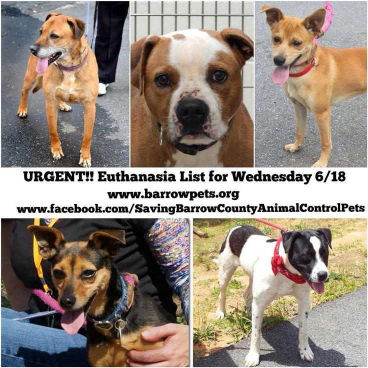 URGENT...PLEASE Urgent Animals Please