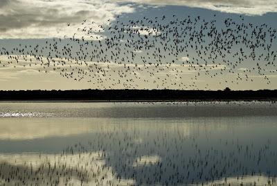 Lagoa do Peixe na cidade de Tavares - RS, Brasil.