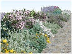 Cottage garden using (waterwise) aussie natives