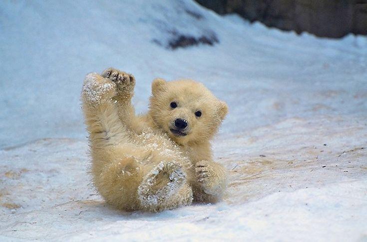 Adorable Baby Polar Bear Photography | Baby animals, Cute animals, Cute baby animals