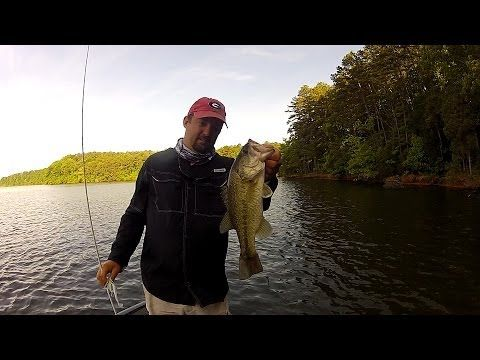 17 best ideas about best bass lures on pinterest | fishing lures, Soft Baits