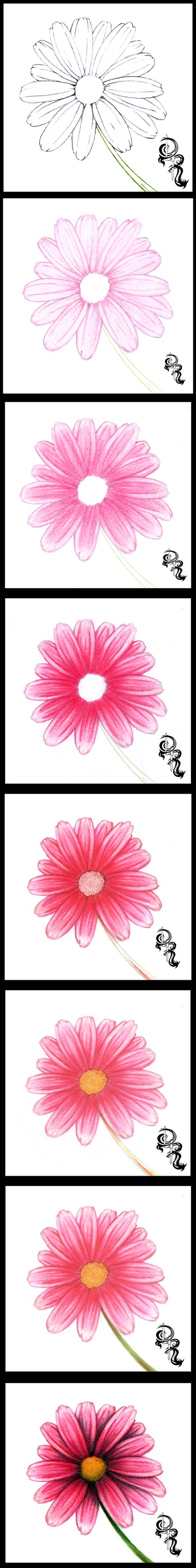 How to draw with colored pencils - How To Draw A Daisy With Colored Pencils A Step By Step Image Of