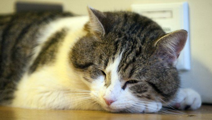 Top 10 Most Serious Cat Diseases - CatTime