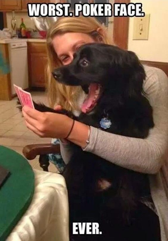 Can't Stop Laughing – 12 Funny Dog Memes