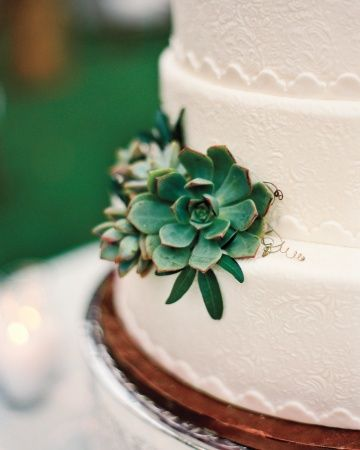 Succulents add some fresh texture and color to this all-white cake