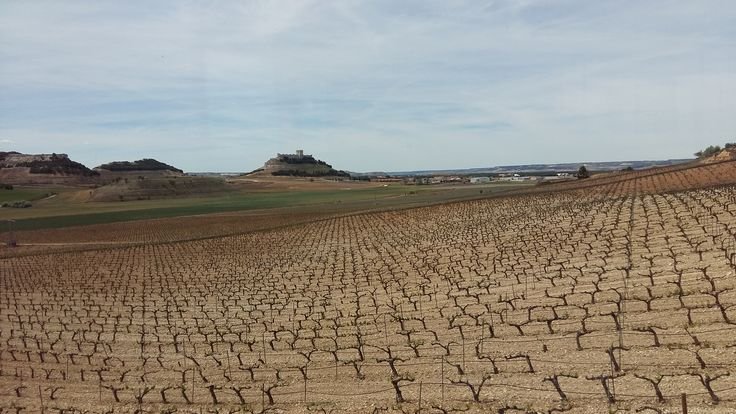Where the wine grows, Rioja and Ribera Cycling