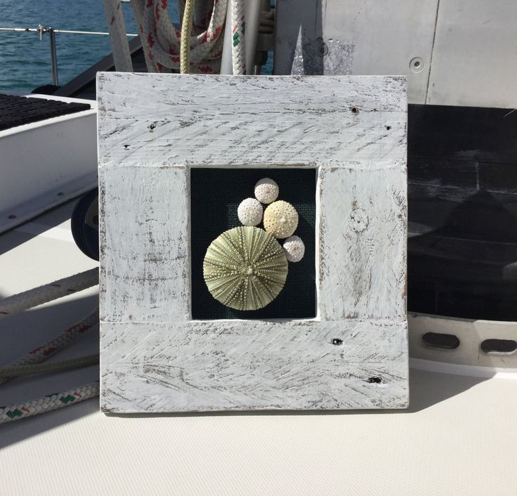 28 best Sand Dollars and Beach Decor at Westeholme Designs images on ...