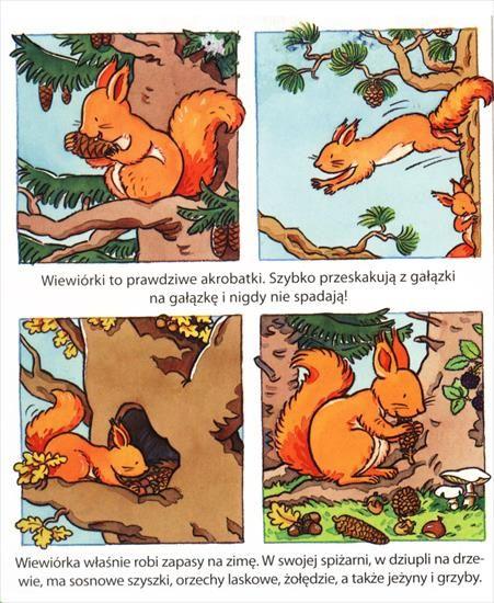 wiewiórka1 - 18.bmp