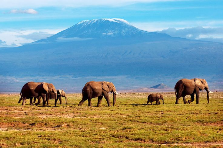 Amboseli-Nationalpark in Kenia. Im Hintergrund erhebt sich das Kilimandscharo-Massiv