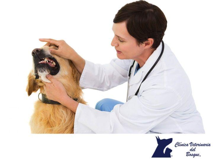 Clínica Veterinaria Del Bosque Cada Cuando Es Conveniente Llevar A Mi Mascota A La Clínca Esto Dependerá De Su Estado Mascotas Cuidados Mascotas Veterinaria