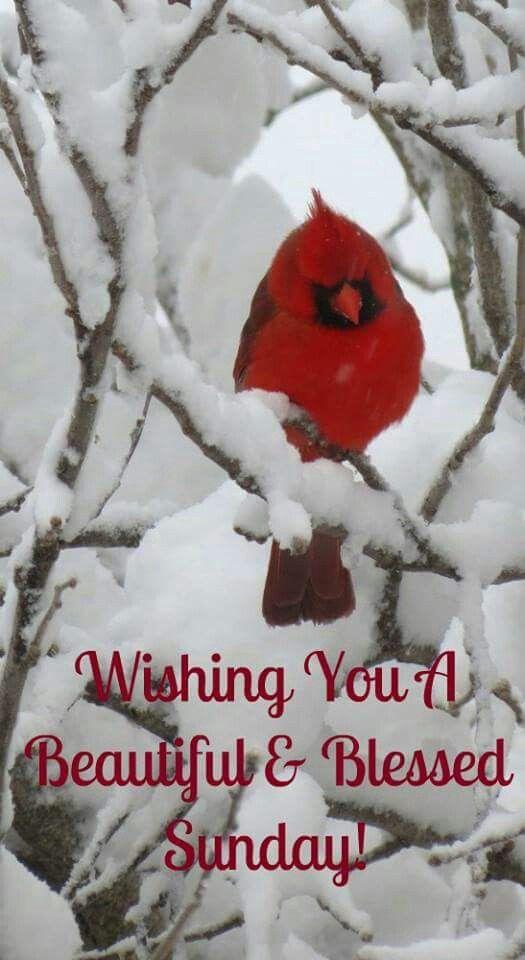 Good Morning Sunday Winter : Best sunday blessings images on pinterest blessed