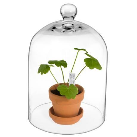 Drivhus Glasskuppel