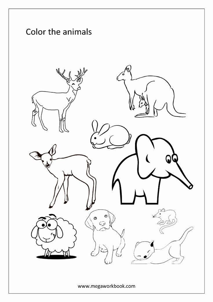 Animal Coloring Videos Unique Free Coloring Sheets