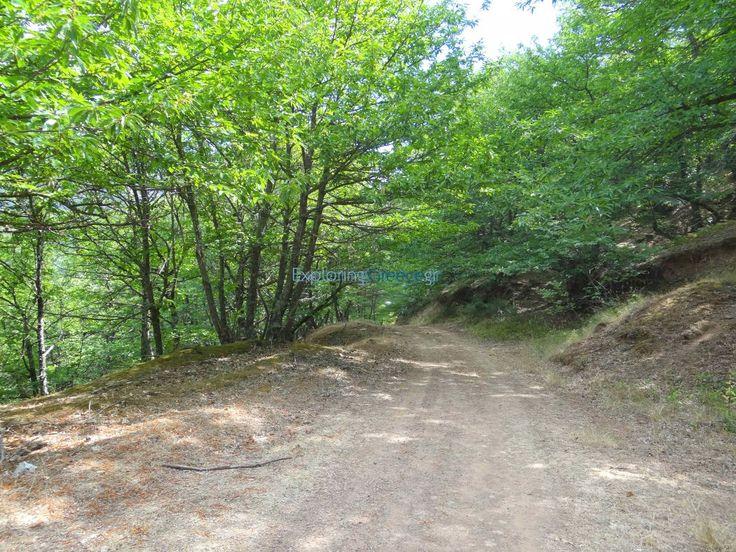 Καστανόδασος στην Κέρτεζη