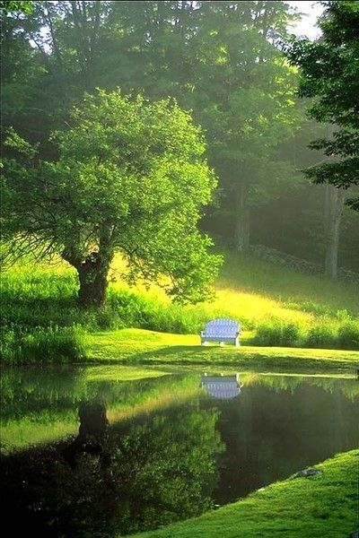 Looks so relaxing.  White bench stands out in the green surrounding