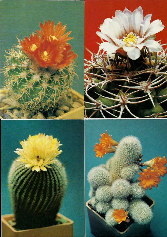 Cacti Cactus - Vintage Russian USSR Postcards - set of 18 by LucyMarket, $16.00
