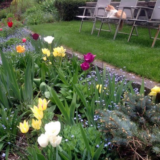 A Pleasant Garden Surprise