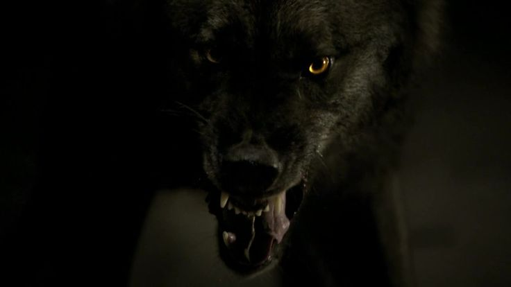 Do You Like The Wolf Tyler? Tyler Is A Black