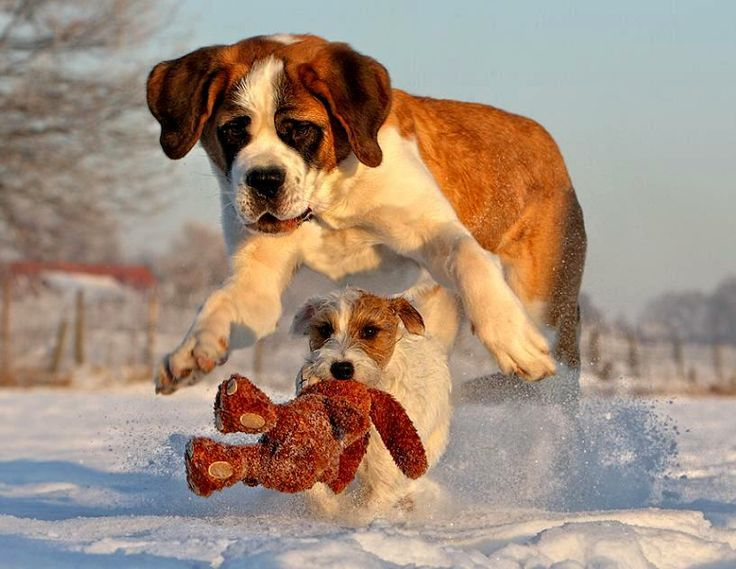 """""""Definitely bit off more than I can chew!""""  Hope the little guy got out of the way!"""