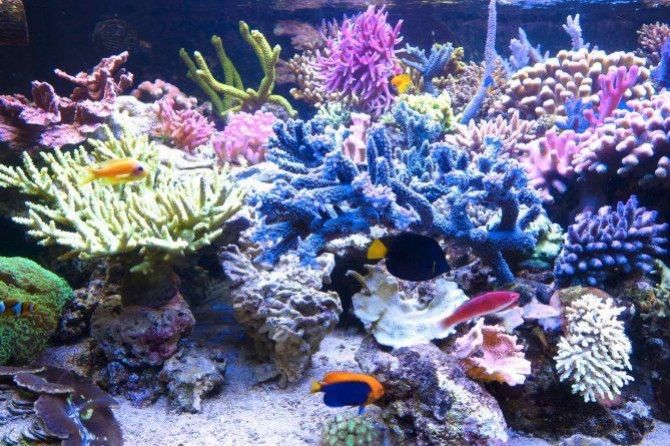 Allestimento acquario marino: Ecosistema