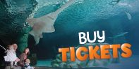 MN SeaLife. Gift cert would be awesome! Buy Tickets