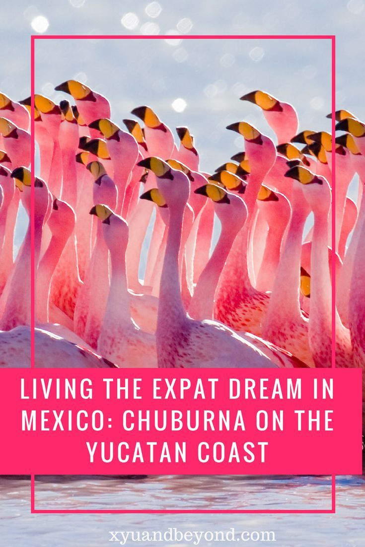 Living the ex-pat life in Chixulub which is located eight km east of the port of Progreso, and 65 km north-northeast of the city of Mérida, perfect for boomers #mexico #retire #expats #travel #chixulub #yucatan #expatsmexico via @https://www.pinterest.com/xyuandbeyond/