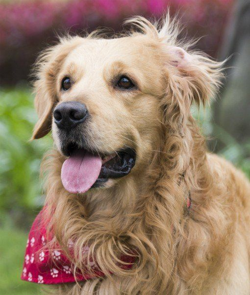 10 Best Dog Breeds for First-Time Owners - Dogs Tips & Advice | mom.me