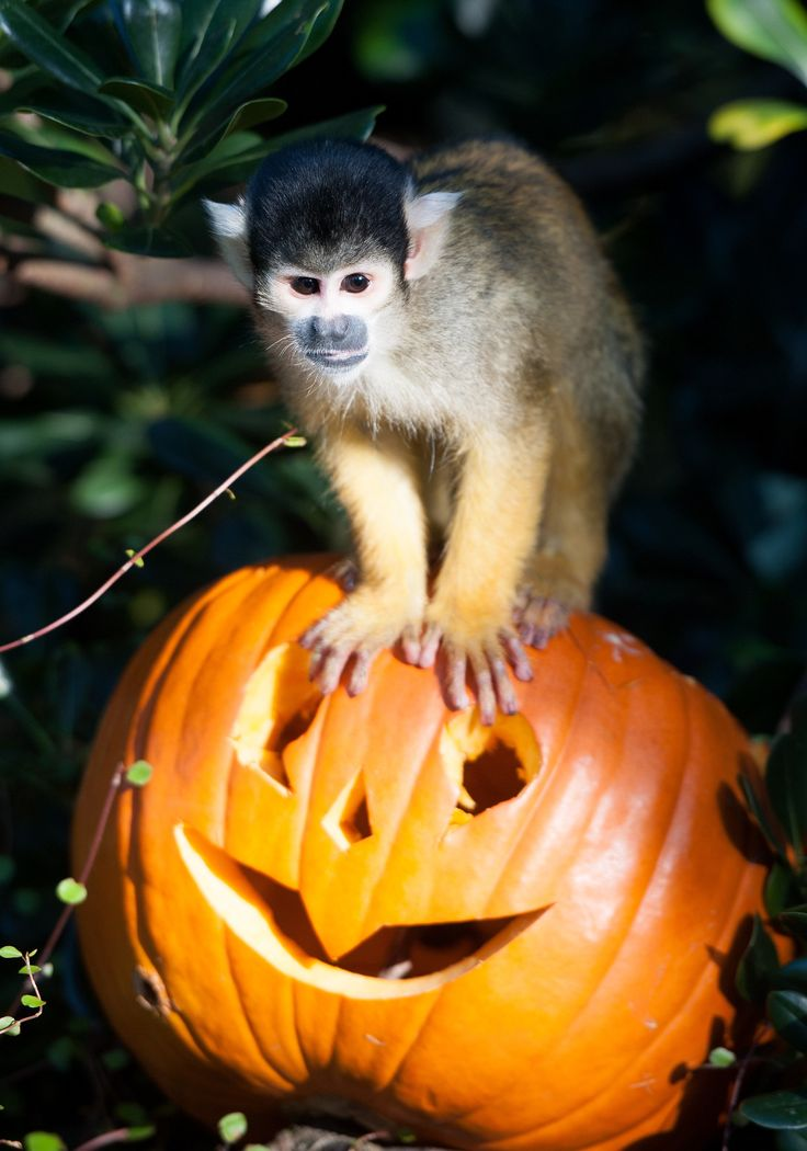halloween at the zoo albuquerque