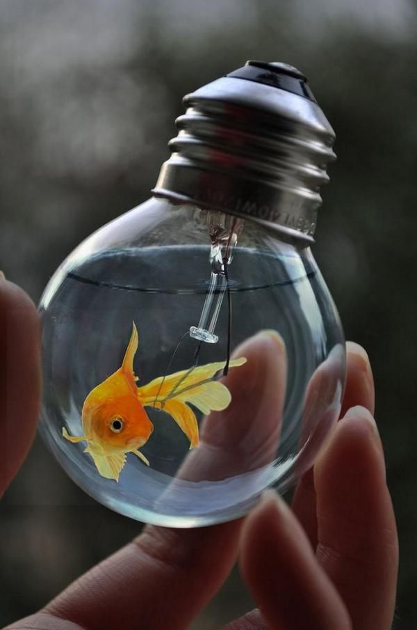 golden fish in a light bulb aquarium. | amazing cuteness, Reel Combo