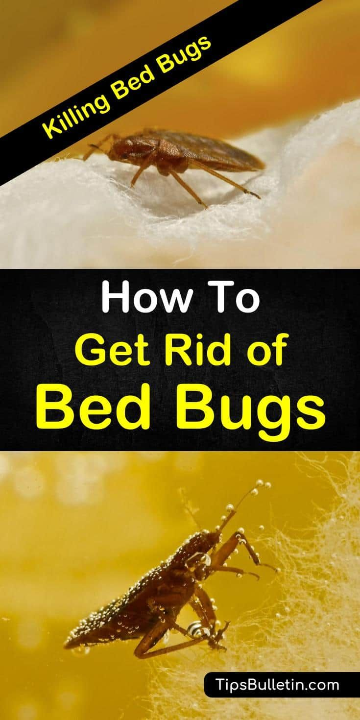 22 Highly Effective Ways To Get Rid Of Bed Bugs Rid Of Bed Bugs