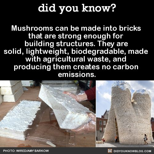 Mushrooms can be made into bricks that are strong enough for building structures. They are solid, lightweight, biodegradable, made with agricultural waste, and producing them creates no carbon emissions.  Source