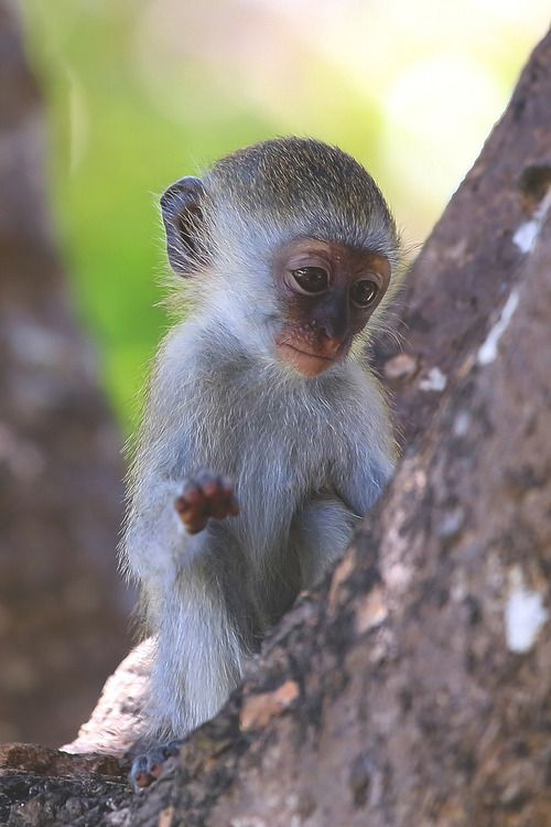 Baby Monkey - by: Libor Ploček