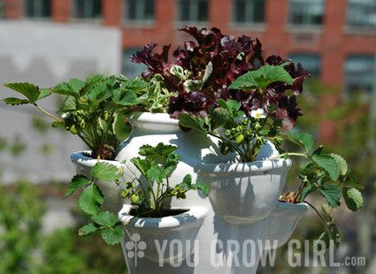 What plants work best in strawberry pots?-Growing an Edible Strawberry Pot-http://yougrowgirl.com/