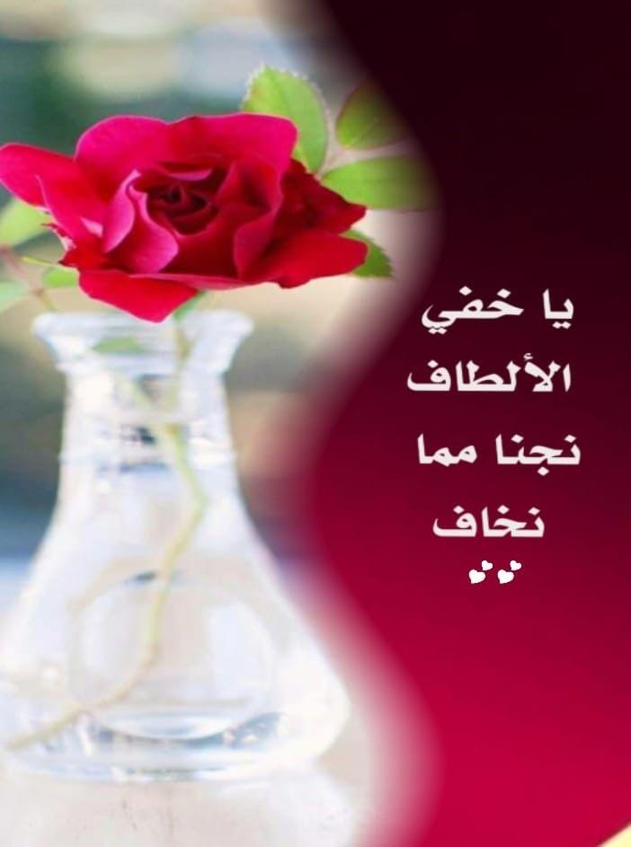 Pin By Eman Duniya On عربي رسائل من تصميمي Rose Flowers Plants