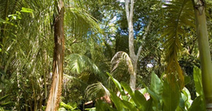 Redacción de una invitación de cumpleaños con temática de la selva. Poner en marcha a tu pequeño con un tema de fiesta de cumpleaños de la selva, mediante el envío de las invitaciones hechas en casa que incorporan un texto inteligente. Comienza con una simple tarjeta imaginando una escena de la selva o de animales de la selva, y escribe la información de la fiesta. Además de obtener invitados entusiasmados con la ...