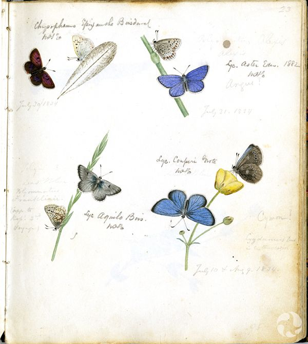Colour illustrations of butterflies and small stems.