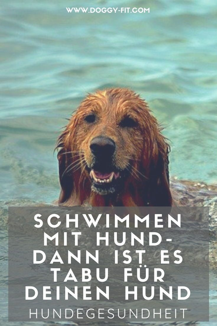 Pin Auf Von Und Mit Hundeliebhabern