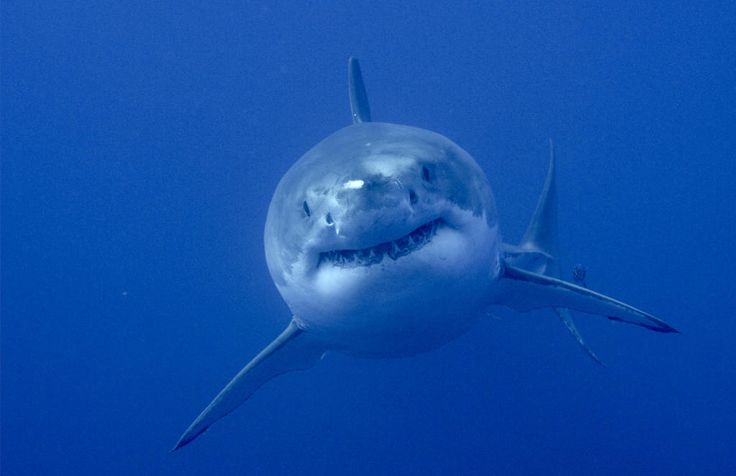 Twitter's Favorite Shark Finds Love On The Jersey Shore