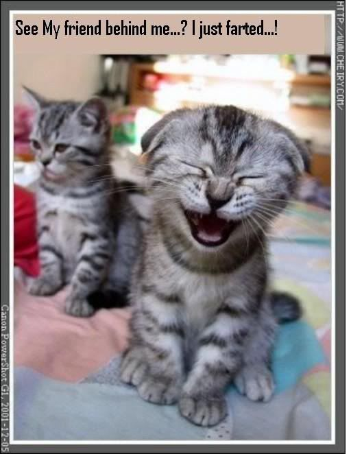 Funny Kittens Image | Funny Kittens Picture Code