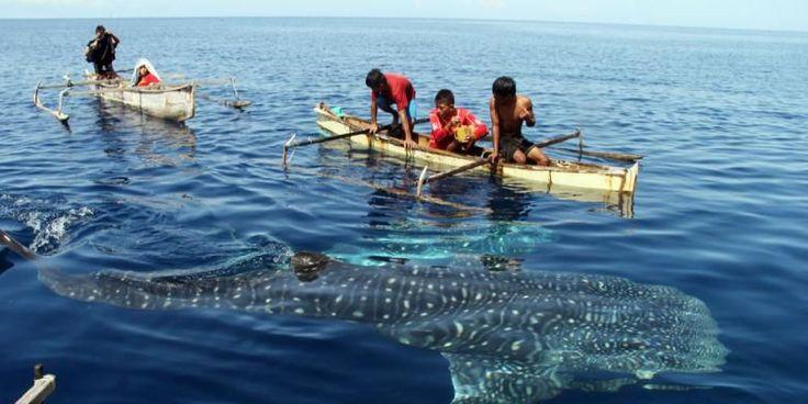 Mau Lihat Paus, Lumba-Lumba, Atau Dugong Di Habitatnya? Coba Ke Sini - http://darwinchai.com/traveling/mau-lihat-paus-lumba-lumba-atau-dugong-di-habitatnya-coba-ke-sini/