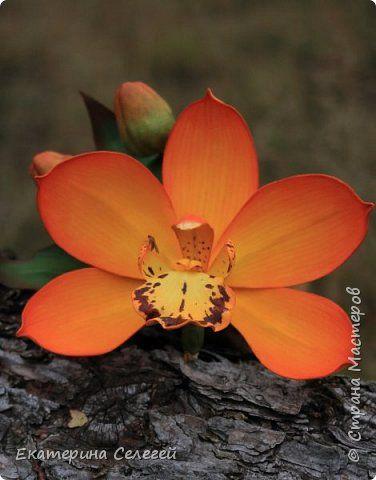 орхидея из фоамирана фото 5
