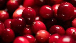 Mama Stamberg's Cranberry Relish - Susan Stamberg's Holiday Tradition - http://www.npr.org