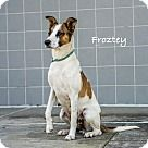 Lancaster, TX - Border Collie. Meet Froztey, a for adoption. http://www.adoptapet.com/pet/17918524-lancaster-texas-border-collie-mix