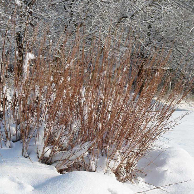 7 best landscape edging images on pinterest landscaping for Ornamental grass edging