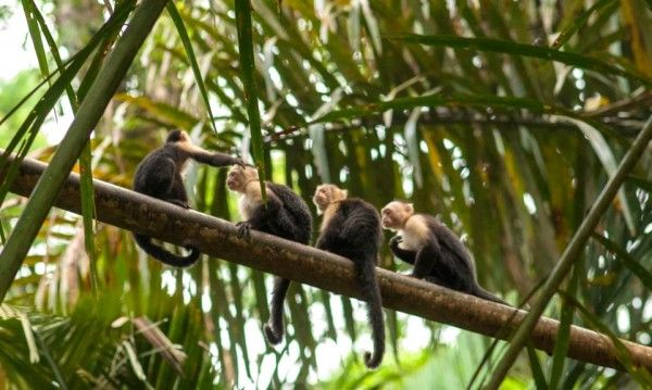 Finding paradise at Tortuguero National Park