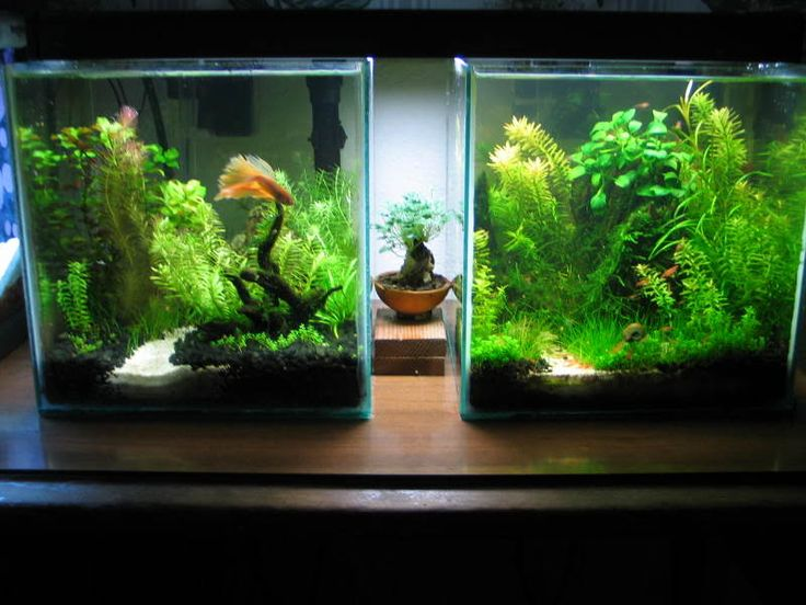 324 best ideas about project pond on pinterest garden for Fluval chi fish tank