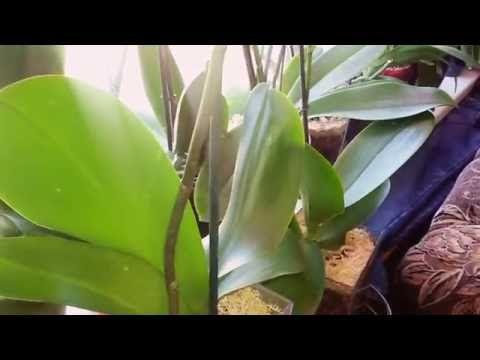 Орхидей в закрытой системе ещё один+ - YouTube
