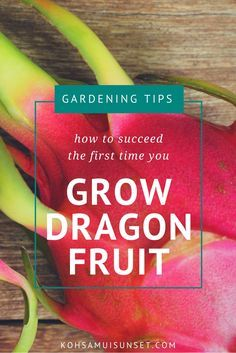 Growing dragon fruit: How to succeed the first time you grow dragon fruit (we've made all the mistakes for you!)